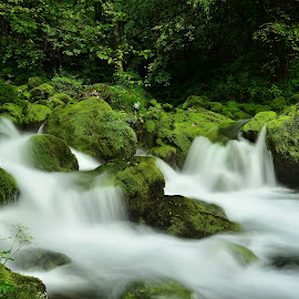 Zelena preproga by Bojan Kolman - Landscapes Waterscapes (  )