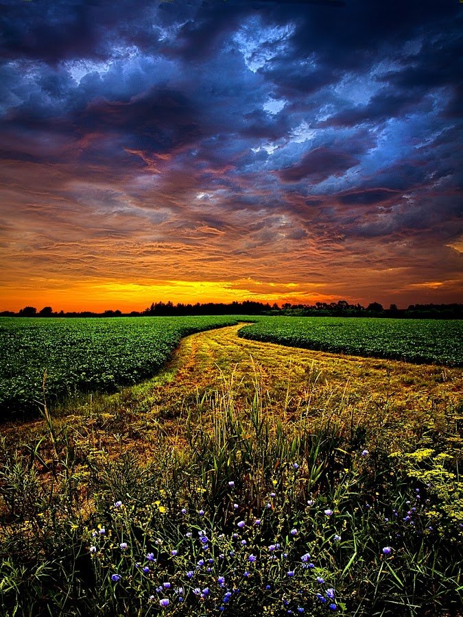 A Long Walk by Phil Koch - Landscapes Prairies, Meadows & Fields ( summer. spring, vertical, photograph, farmland, yellow, leaves, love, nature, barn, autumn, snow, flowers, orange, twilight, agriculture, horizon, portrait, winter, environment, season, national geographic, serene, floral, inspirational, wisconsin, natural light, phil koch, spring, sun, photography, farm, ice, horizons, inspired, office, clouds, green, scenic, morning, field, red, blue, sunset, peace, fall, meadow, crops, earth, sunrise, landscapes, , hdr )