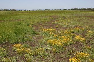Photo: Old USAF Transmitter Site (S of Grasslands Regional Park)