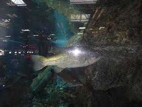 Photo: Big Bass