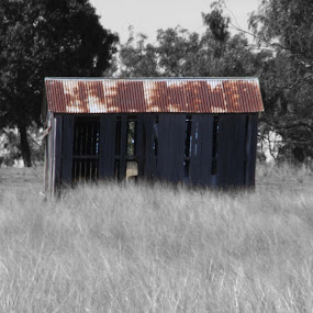 Rustic by Jan Crawford - Black & White Buildings & Architecture ( shed, building, old, b&w, bush scene, rustic,  )