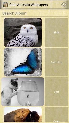 可爱的动物壁纸