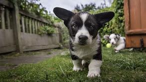 Puppy Talk thumbnail
