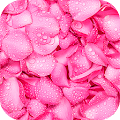 Pink Wallpapers | hd backgrounds APK