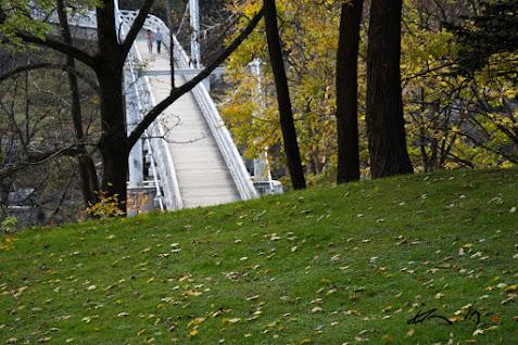 揺れる木の橋