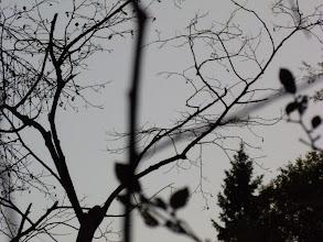 Photo: По небу носились летучие мыши размером с гуся (реально, со скворца!), но в кадр не попали ни разу