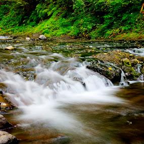 Portland by Eleazar Valdez - Nature Up Close Water ( water, oregon, portland, nature, waterscape, green, natural, river )