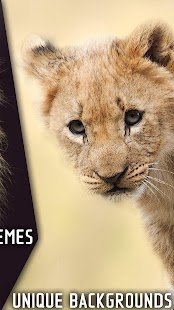 Lion Wallpapers – Animal Pics - náhled