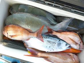 Photo: オナガに真鯛、ヤイトに・・・。