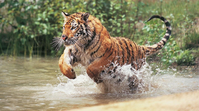 Watch Animals Gone Wild live