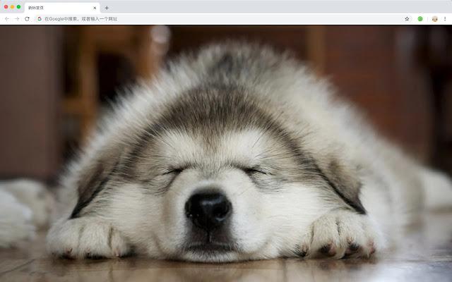 Siberian Husky Popular Pets HD New Tabs Theme
