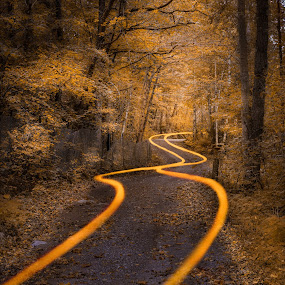 Autumn trails by Thomas Bjørnstad - Landscapes Forests ( autumn, forest, road, leaves, trails )