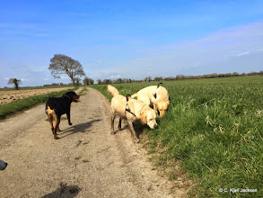 Photo: Wednesday walkies with the gang