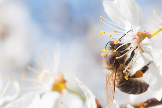 Free Educational Toolkits to Learn More about Honey Bees - 5 Minutes for Mom