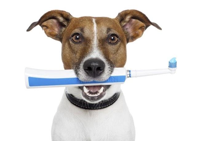Cómo lavarle los dientes a un perro