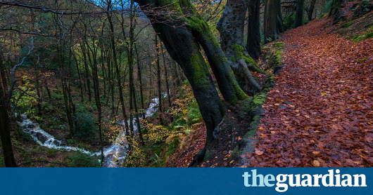 Access to nature reduces depression and obesity, finds European study | Society | The Guardian