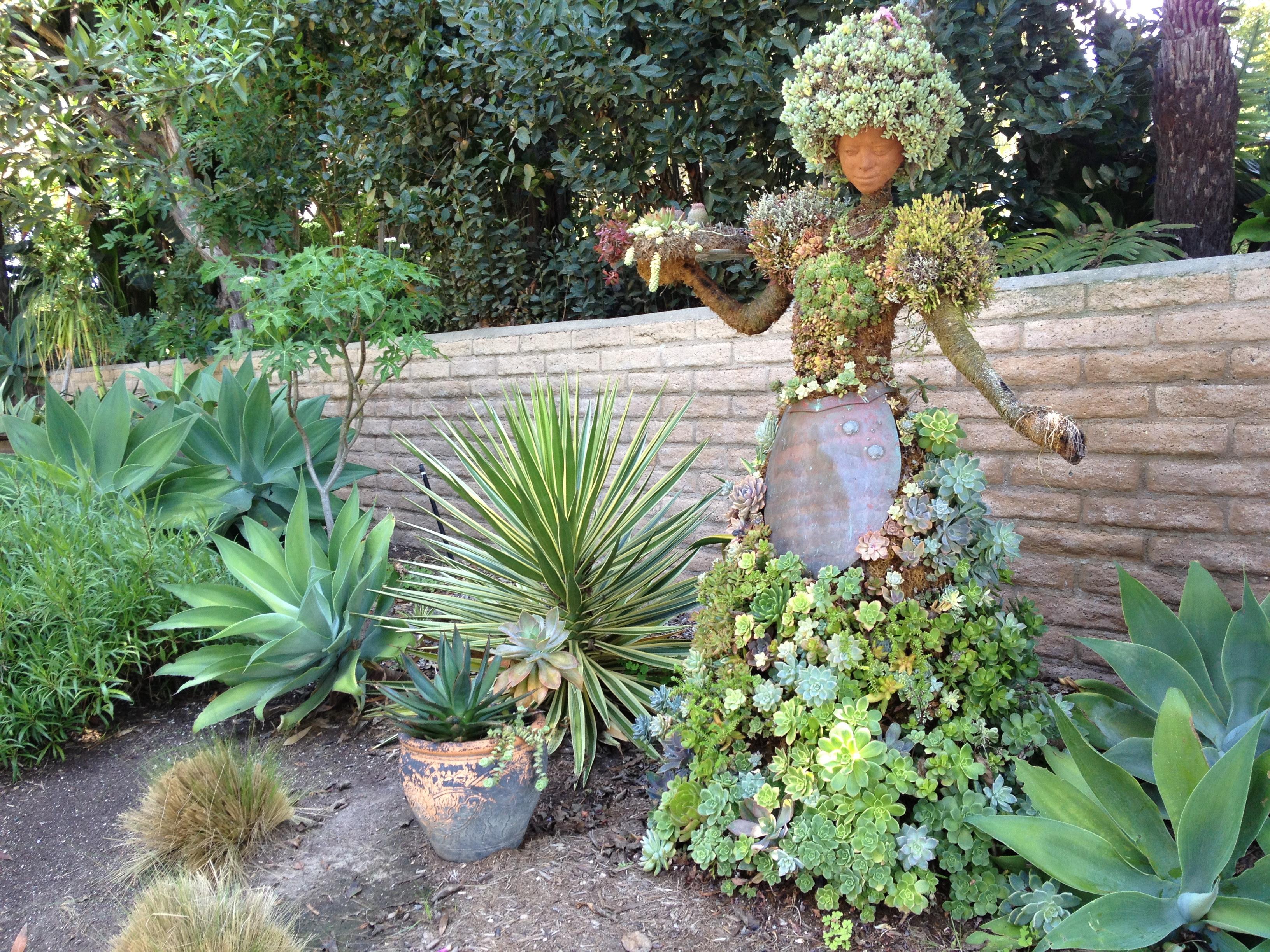 Succulents Garden Ideas Homsgarden