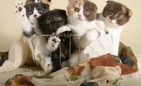 Nama Kucing Lucu Laki Laki