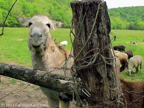 The Daily Donkey 134