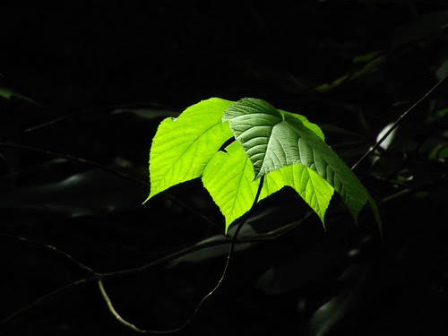 IMG_7523_Leaf_Along_Middle_Prong_Trail