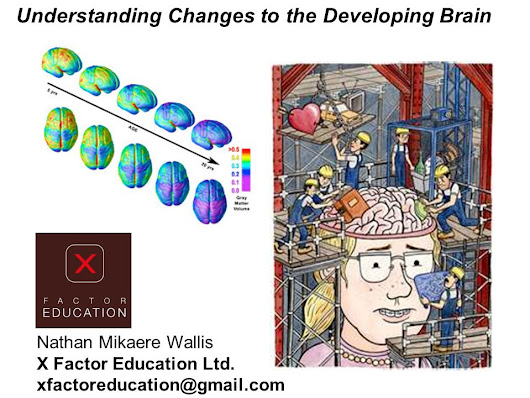 Understanding Changes to the Developing Brain -  ppt download