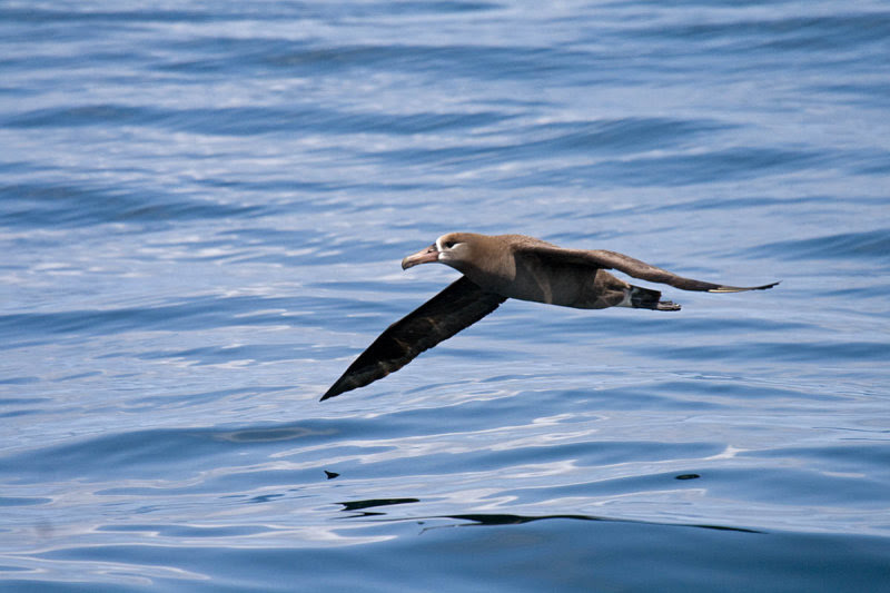 pelagic tours