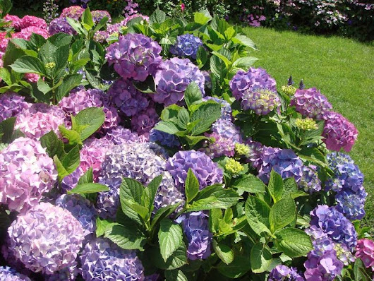 High on Hydrangeas: Is Garden Flower the Next Cannabis?