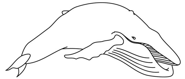247 Dessins De Coloriage Baleine à Imprimer Sur Laguerchecom Page 2