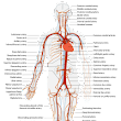 Arterial disease - symptoms and treatments | San Francisco Vein Center