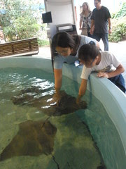 Girls Petting Sting Rays