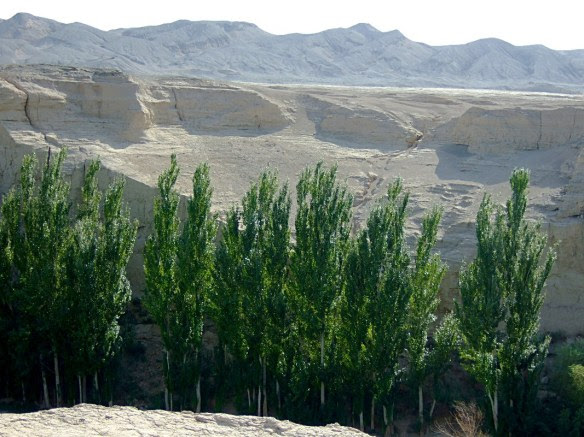 The Turpan area is a bleak desert that bursts into life where there is water