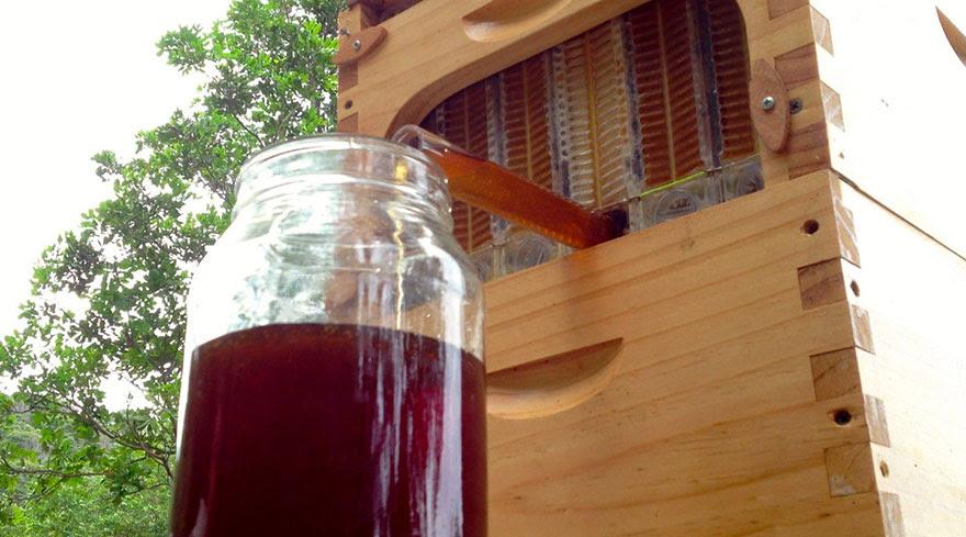 nueva-colmena-apicultura-miel-grifo-stuart-cedar-anderson (4)