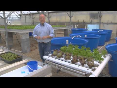 greenhouse aquaponics from the ground up indoor aquaponics garden free
