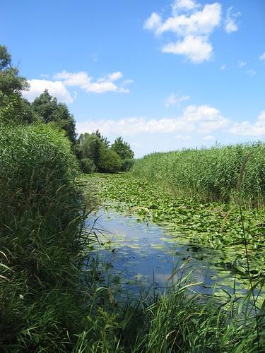 Morava Floodplain