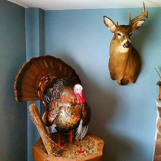 Cliffords Taxidermy | What's On Your Wall?