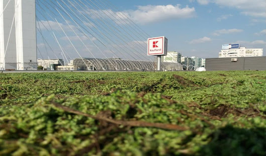 How implementation of green infrastructure will help Europe reach carbon neutrality
