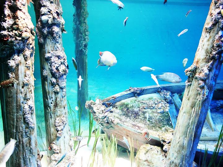 fishes S.E.A. Aquarium world's largest aquarium