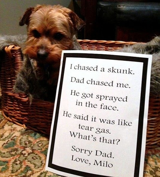 6.17.16 - Dog Shaming - Father's Day Edition21