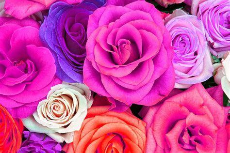 Watercolor Roses Wallpaper Freebies!