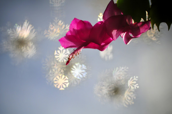 more Broken Bokeh