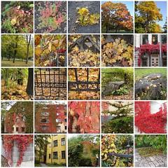 Ruska Autumn