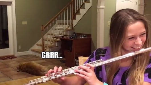 This dog basically hates it when this girl plays the flute