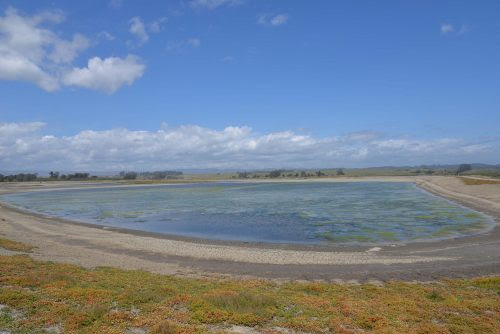 Elkhorn Slough: From Salt Ponds to Bird Sanctuary | Mobile Ranger