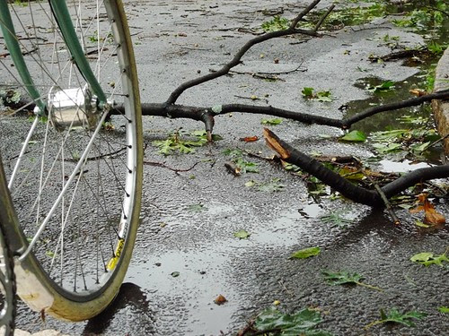 Irene, Branches on the Road