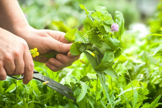 Natural Herbal Remedies and Treatments