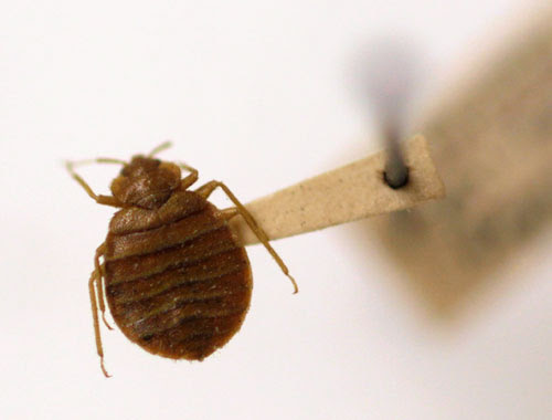 More than bookworms! Students: Bed bugs and other creepy crawlies are taking over Brooklyn College