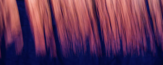 Abstract Forest Woods At Sunset Time by Alex Grichenko
