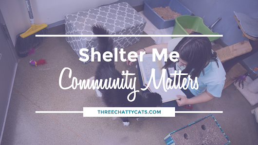 Shelter Me: Community Matters (Episode 7) | Three Chatty Cats