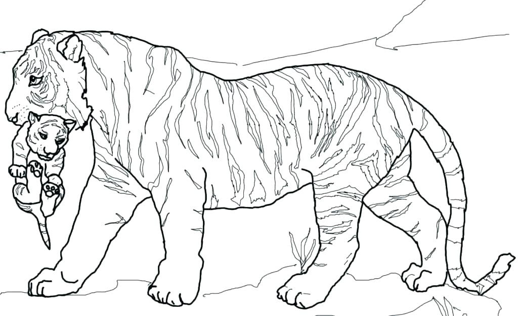 Realistic Printable Tiger Coloring Pages | 626x1024