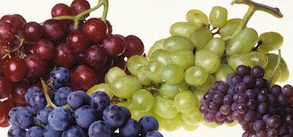 White Grapes are Higher in Vitamin C than Orange Juice